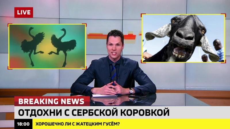 Европейские туристы штурмуют сербские зоо-бордели. Ломаные новости 9 от 19.10.17