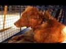 Огромная рана пса была полна опарышей и вот каким он стал