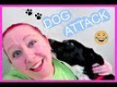 I GOT ATTACKED BY A DOG ASHLEY DANEILLE