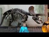 Гигантские скелеты динозавров! Распаковываем яйца с динозаврами!