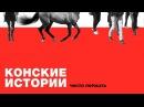 Видео беседа Конские истории Выпуск 2 Стас Слободянюк