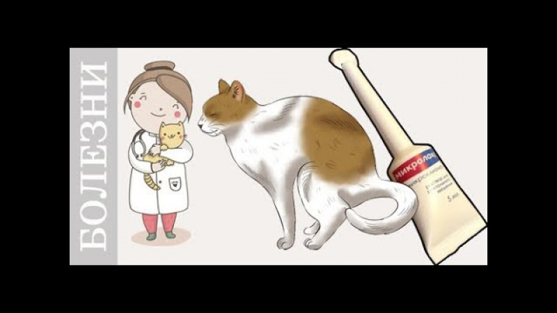 Запор у кота или как поставить клизму кошке собаки Советы ветеринара