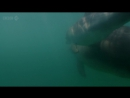 BBC Natural World 2010 - The Dolphins of Shark Bay (HDTV x264)