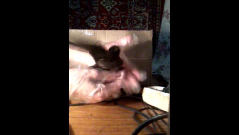 Video-2011-01-06-20-48-29