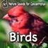 Study Music - Natural Bird Sounds to Aid Awareness