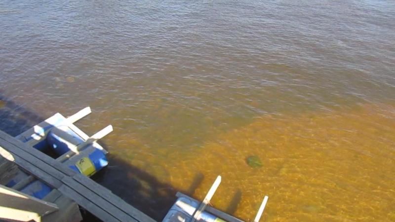 На Петропавловке, вид с моста.