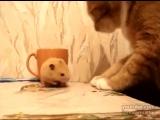 greedy hamster (Жадный Хомяк)