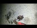 пошел на рыбалку а поймал летучую мышь 2
