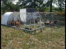 Chicken Tractor Good Design Practices, Tips Tricks For Building, Ideas