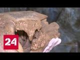 На Командорских островах обнаружили целый скелет исчезнувшей стеллеровой коровы