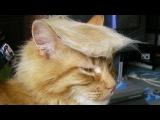Постарайся не рассмеяться - Самые Смешные Коты 2017 #4 | Funny Cat Fails Compilation [FUNNY TREND]