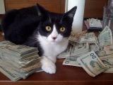 США. Услуги ветеринара, лечение нашей кошки.