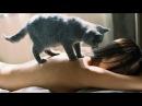 Самый мстительный кот в мире! Это надо видеть! Когда не стоило дразнить кота! Приколюхи и приколы