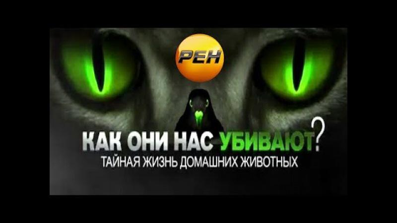 Как они нас убивают Тайная жизнь домашних животных 18 08 2017 Документальный спецпроект