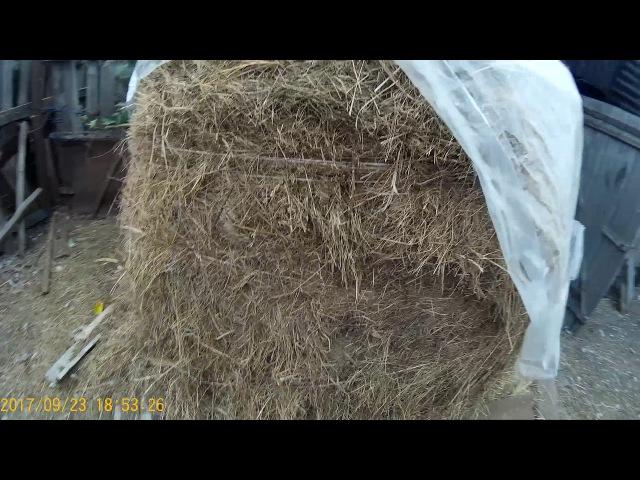 Сено / Трава / Сколько нужно в зиму для кроликов / Кроликам / Сена кроликам в зиму / Семья в деревне