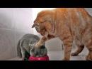 Смешное видео про котов