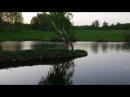 Тайны тёмной лощины заблудились на болоте