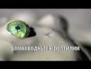 BBC Жизнь на Земле Земноводные и Рептилии / Life on Earth / 2009