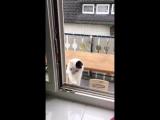Кошка передумала заходить