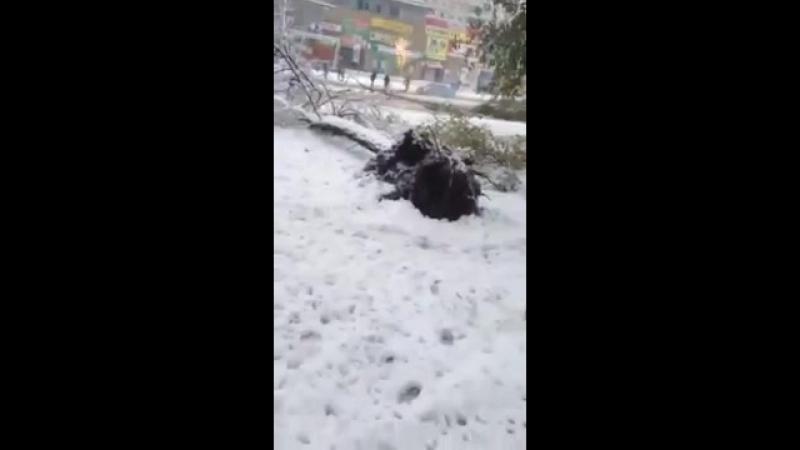 В Днепропетровске от снега падают деревья и столбы. 19.04.2017