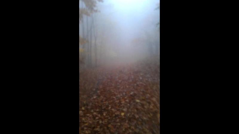 Сонная Лощина кадр 1 дубль 1 (Тим Бертон епть)