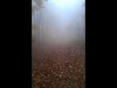 Сонная Лощина кадр 1 дубль 1 Тим Бертон епть
