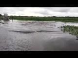 Странная река