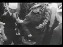 Золото нацистов В поисках золота нацистов Документальный фильм