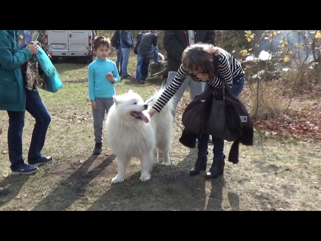 Полсотни ездовых собак приняли участие в гонках на собачьих упряжках в Ставропо