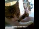 Крутое видео про крутых кошек S2E1