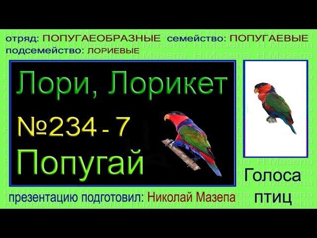 Голоса птиц Лори Лорикет