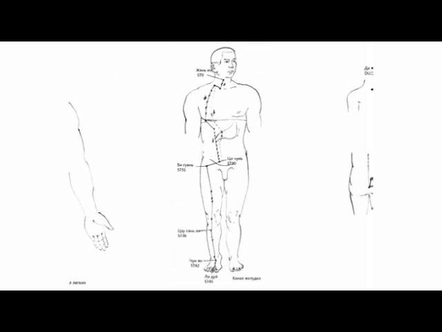 Цин Чжун Ян Шин Дао Инструкция по Применению Организма