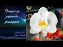МК Орхидея Фаленопсис из зефирного фоамирана Мастер класс Елены Гуреевой