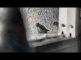 Dan Fogelberg - Seeing You Again (HQ) + lyrics