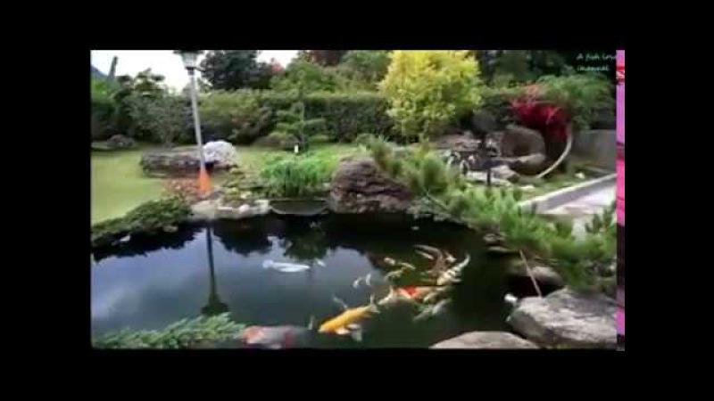 Beautiful water garden with japanese koi fish 2017