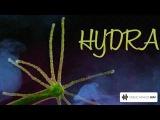 HYDRA (Poppova hard mix)