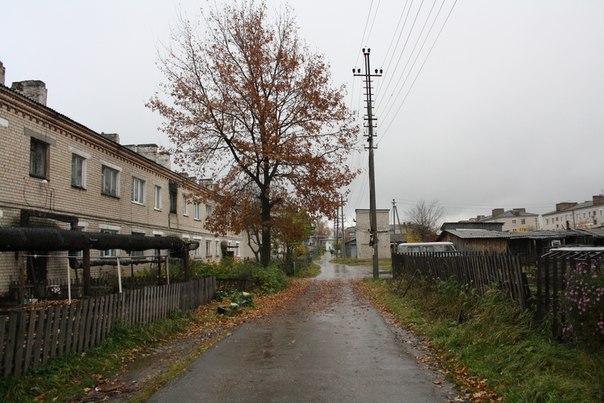 Дуб у дома Макса Лебедева вырос и заливает своей листвой всё.  14 ноября 2017