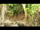 остров Баунти с диким вараном!