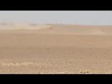 Тигры на месторождении Бир-Фахд