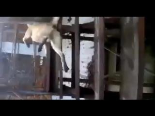 Жестокий отлов бродячий животных