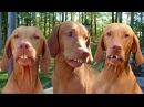 Угарные приколы с животными Топ 2017 funny videos