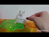 Lt. Hamster  #coub, #коуб