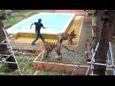 Маруся Квест на Пхукете Tiger Kingdom, Таиланд