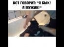 Кот кричит я бык! Я мужик! Я думал коты не знают русского