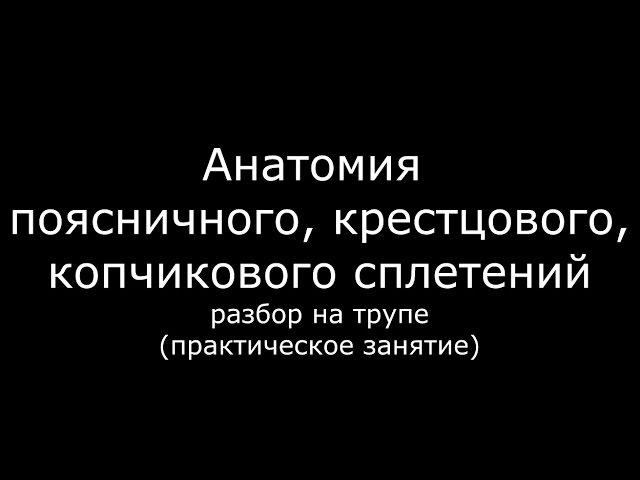Анатомия поясничного, крестцового и копчикового сплетений - meduniver.com