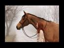 ~ Конный спорт ~ Zayde Wolf - Walk throught the fire ~ Equestrian sport ~