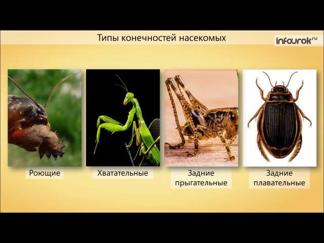 класс насекомые строение
