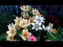 Мой цветущий дворик в июле🌸 🌹 🌺 Красавица Лилия Петуния Бальзамин Флоксы однолетние