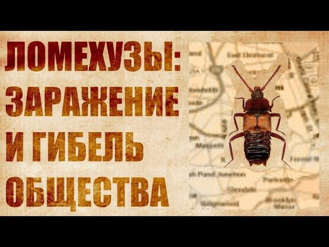 Ломехузы. Захват и уничтожение муравейника. Все как у людей