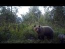Медведица с медвеженком. Видео Колесников С, Городилов С..EK000006